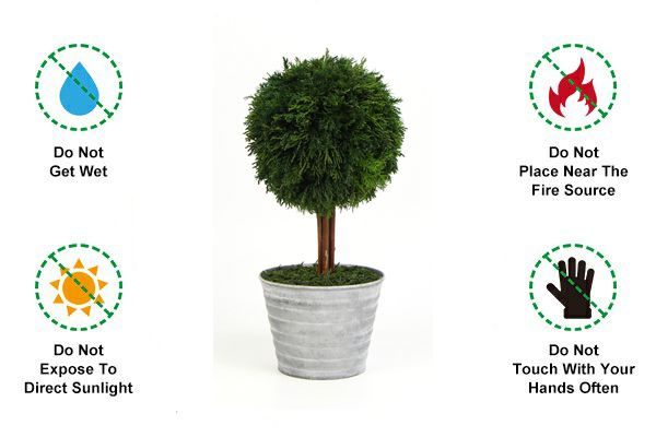 Precautions for using preserved topiary