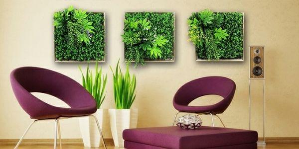 Sunwing framed green walls