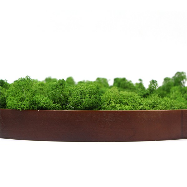 moss wall frame for wholesale