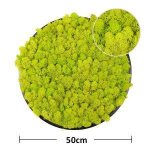 size of framed moss