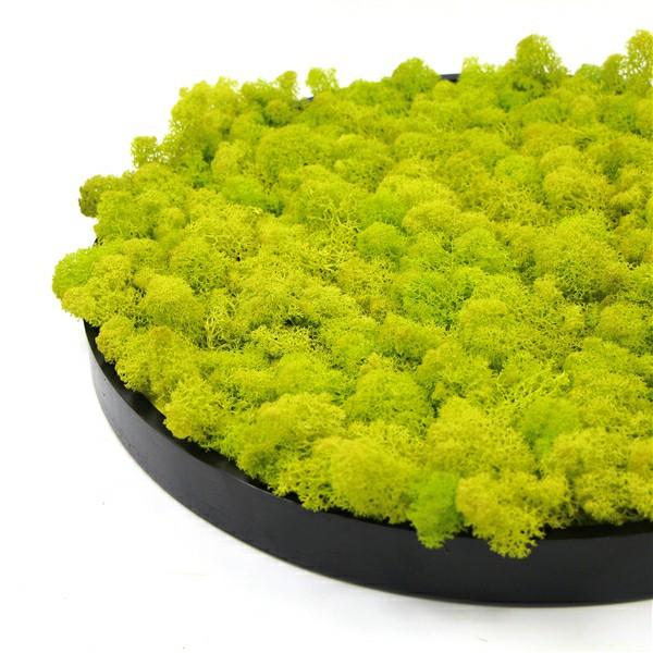 framed moss details