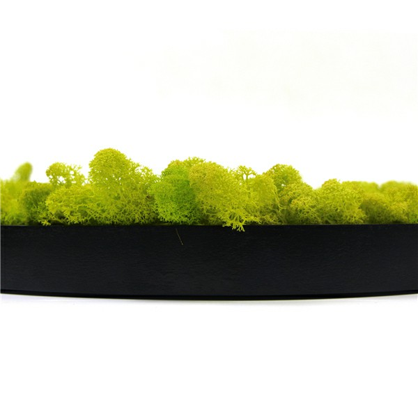 framed moss wall wholesale
