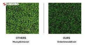 boxwood hedges panels