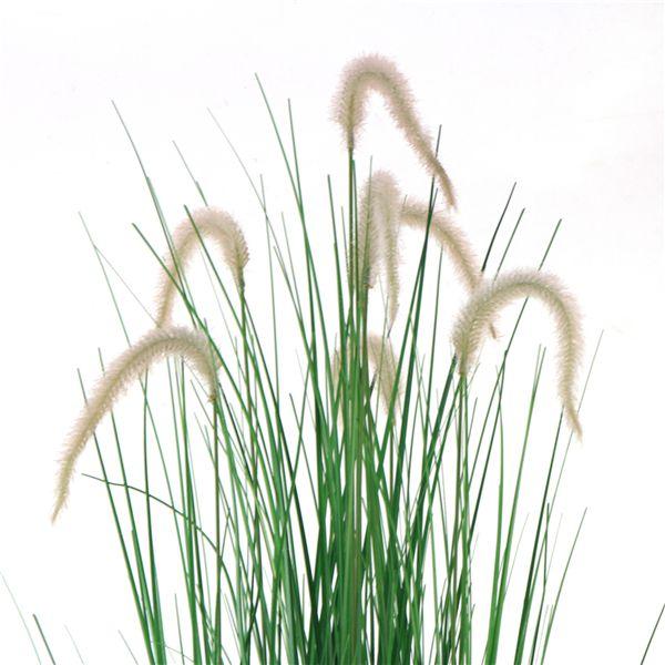 Artificial Setaria Grass detail