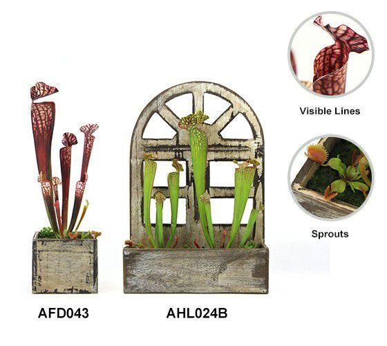 Artificial carnivorous plants details