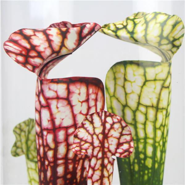 leaf details of faux carnivorous plant