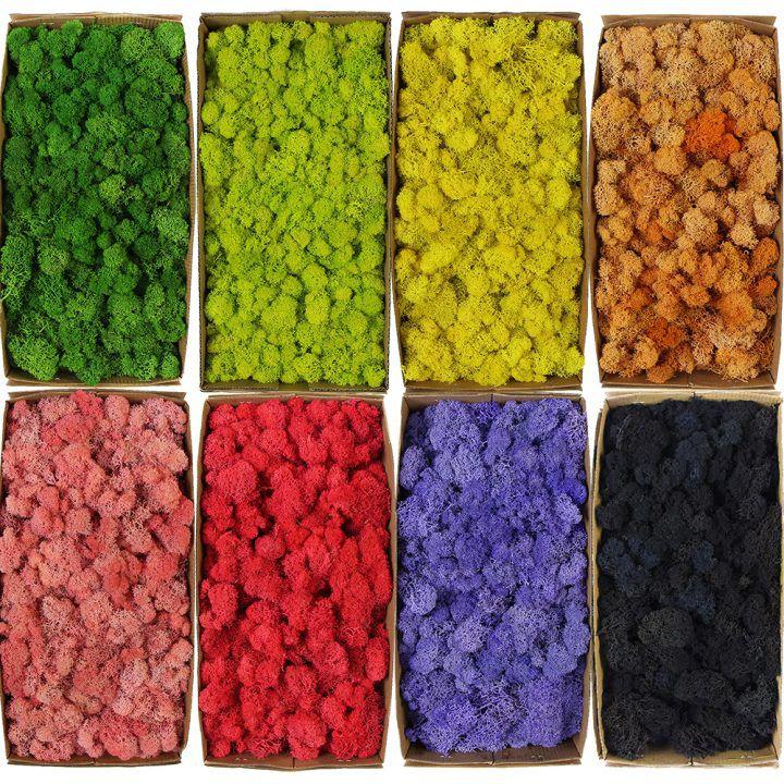 colors of reindeer moss