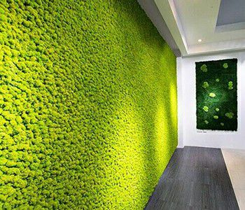 dried green wall moss for interior design