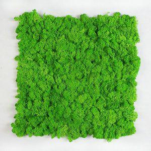 flake moss