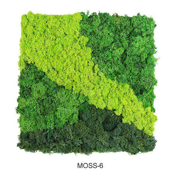 flowy design natural wall moss mats