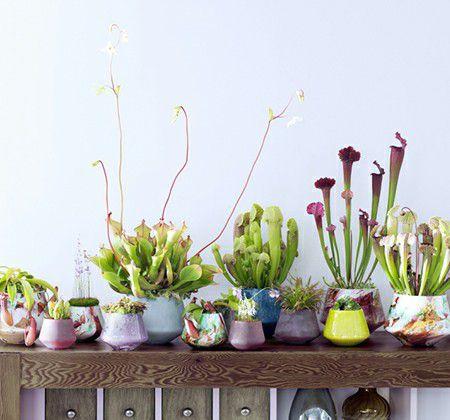 indoor artificial carnivorous plants