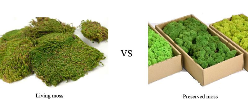 living moss and preserved moss