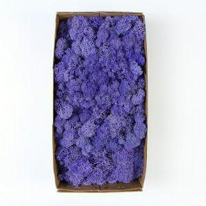 moss in box