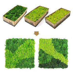 reindeer moss mat design