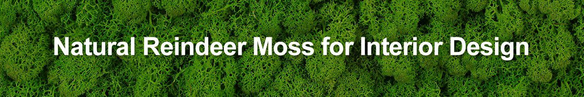reindeer moss mats for interior design