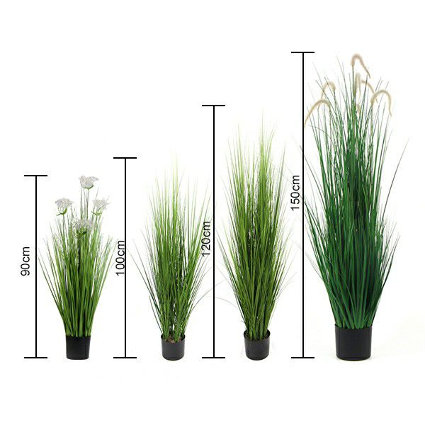 size of onion grass