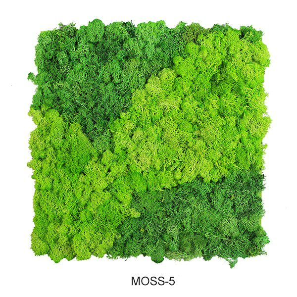 wall moss mats with specific patterns