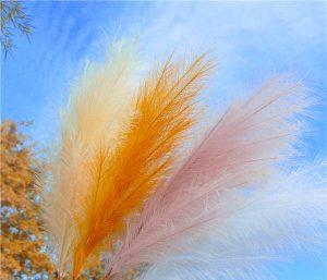 Artificial pampas under the autumn sky