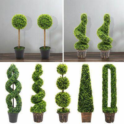 boxwood topiary trees wholesale