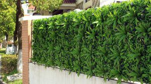 Apply Artificial Outdoor Privacy Hedges to Home Fence