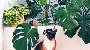 Non-exotic Fake Plants for Pets