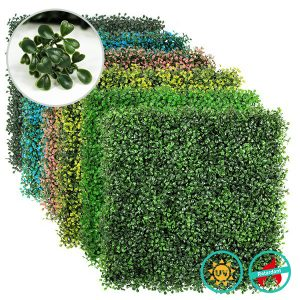 Classic Boxwood hedges supplier