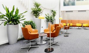 office artificial plants for Allergy_Elimination