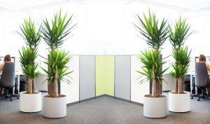long lasting indoor artificial plants