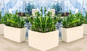 less maintenance fake plants for office
