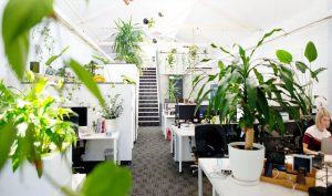 creative office pots, trees and plants