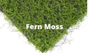 fern moss suppliers in china