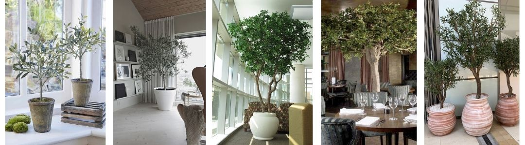 indoor and outdoor uses for artificial olive trees