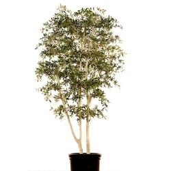 mediterranean artificial live tree