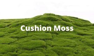 sunwing cushion moss supplier