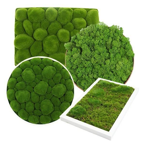 sunwing-framed-moss-for-business-supply