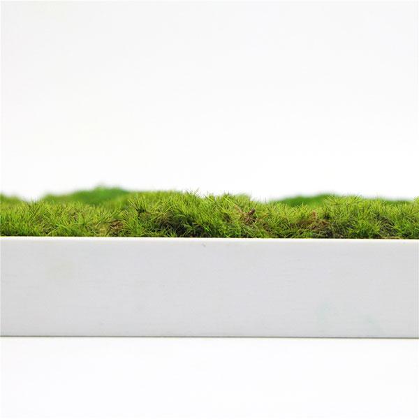 artificial-moss-frame-decor