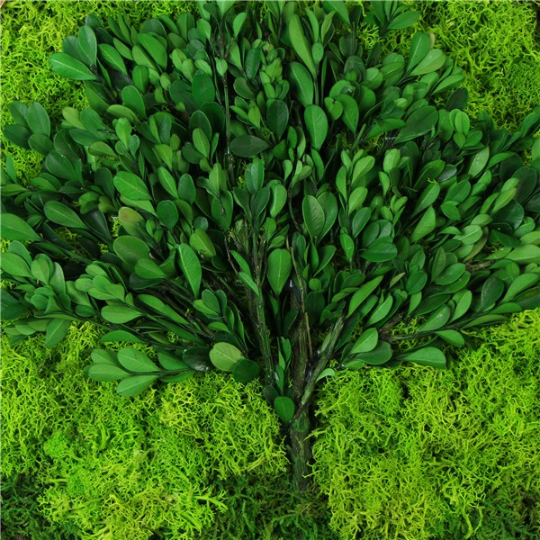 boxwood design with moss frame