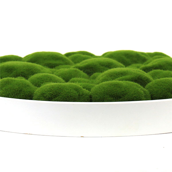 framed-artificial-moss-details