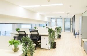 office potted hanging plants