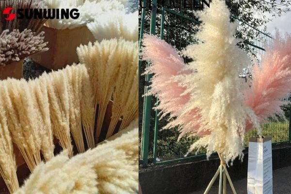 real dried pampas & artificial pampas supplier