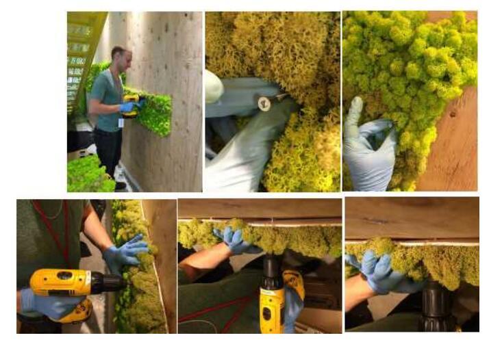 Moss Wall Installation Guide
