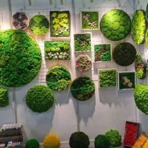 customized preserved moss frames