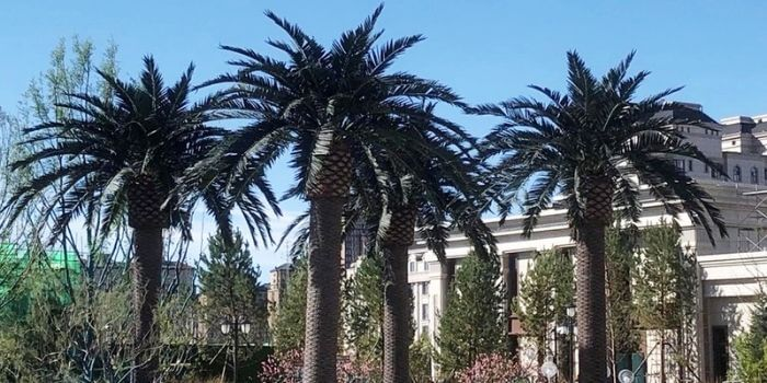 outdoor large artificial trees for landscaping