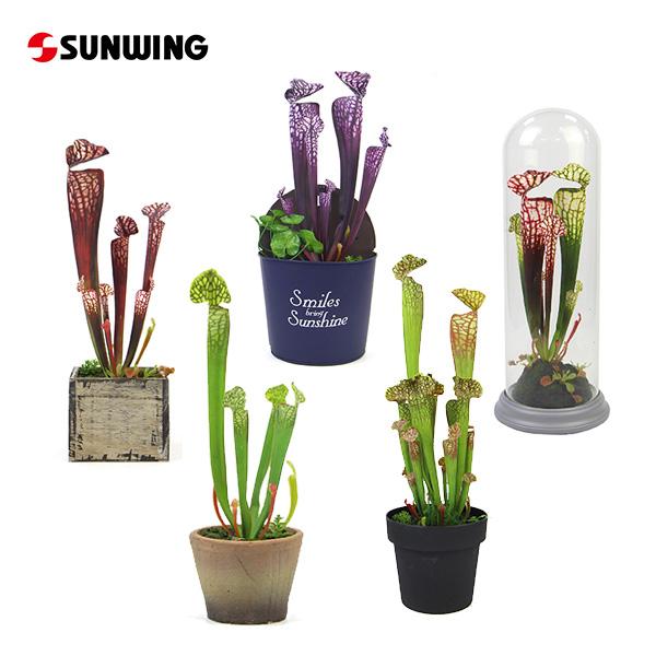 Artificial Pitcher Plants
