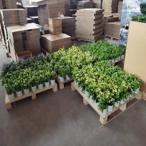 artificial plant in pot manufacturer china