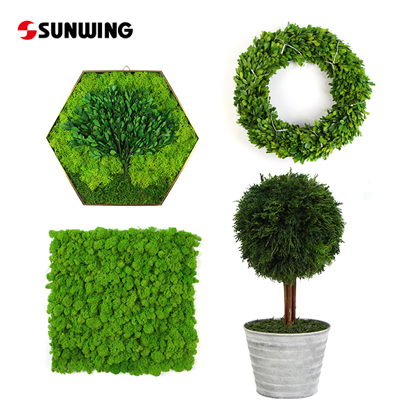 Best Preserved Plants Supplier China