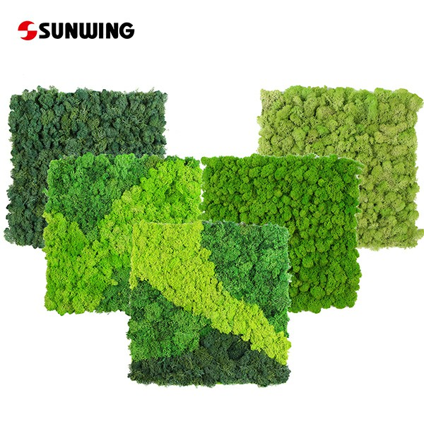 Premier Artificial Moss & Preserved Moss Wall Supply