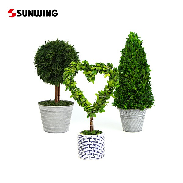 Huge Range of Preserved Topiary & Pots for Supply